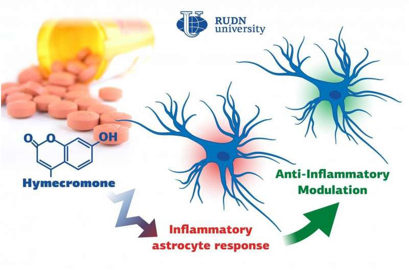 Biologists suggest a new substance to suppress neuroinflammation thumbnail