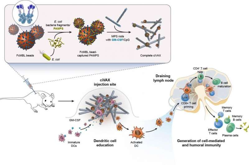 Biomaterial vaccines ward off broad range of bacterial infections and septic shock