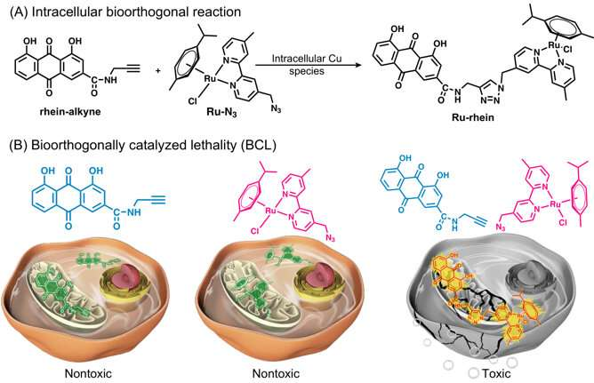 Bioorthogonally catalyzed lethality strategy generates targeting drugs within tumor