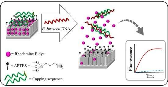 Biosensors to detect P. jirovecii, responsible for Pneumocystis pneumonia