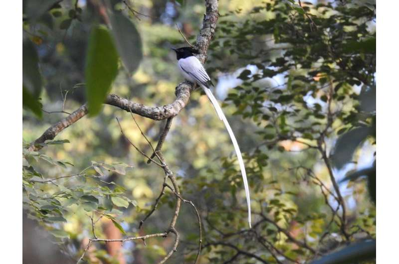 Bird communities threatened by urbanization