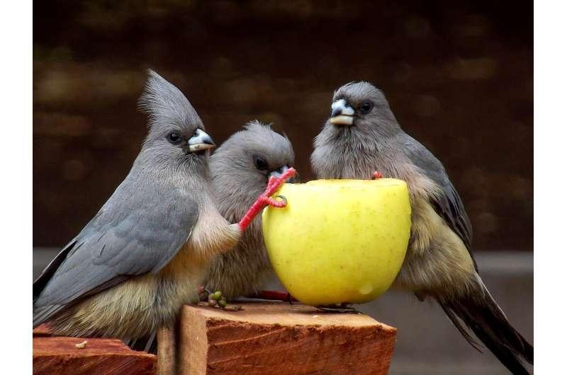 bird fruit