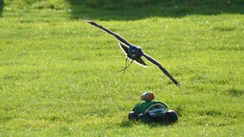 Bird-like robots could assist in medical emergencies and hunt down drones