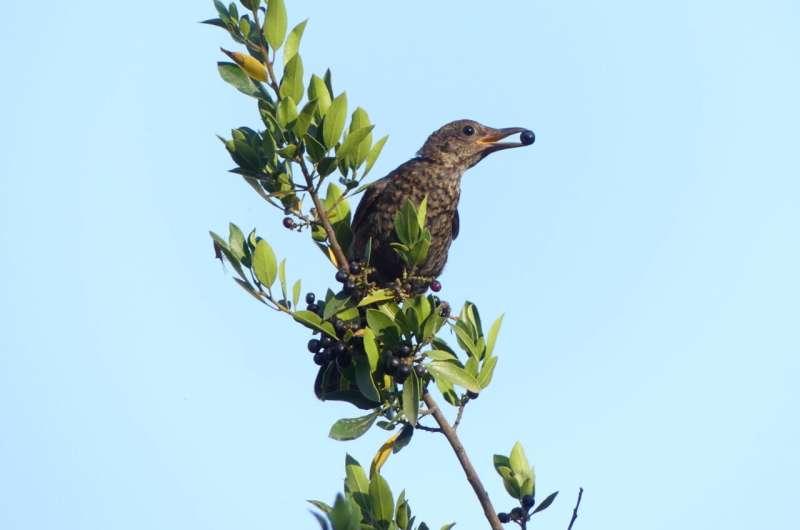 La migración de aves lleva a las plantas en la dirección equivocada para hacer frente al cambio climático
