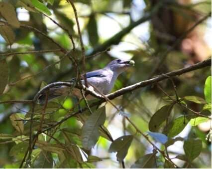 Birds that disperse more types of seed have better evolutionary chances