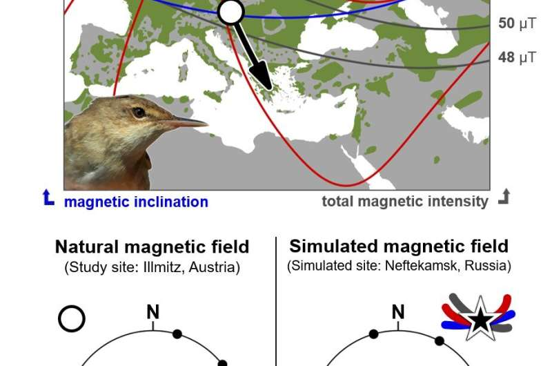 Birds can 'read' the Earth's magnetic signature well enough to get back on course