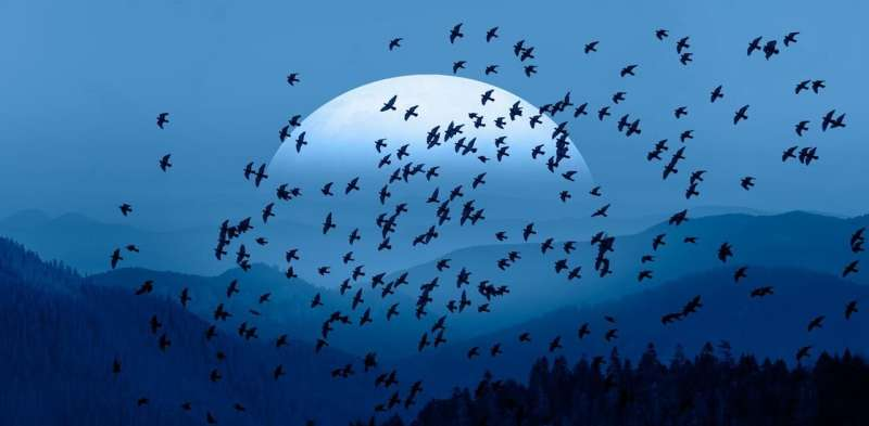 Birds use massive magnetic maps to migrate – and some could cover the whole world