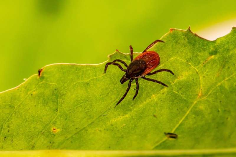Black patients' Lyme disease often diagnosed late, possibly due to missed signs