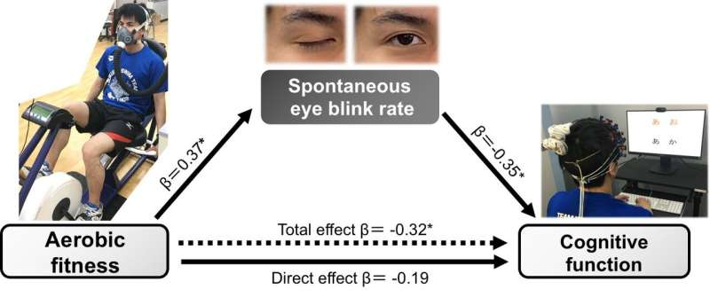 Blink! The link between aerobic fitness and cognition