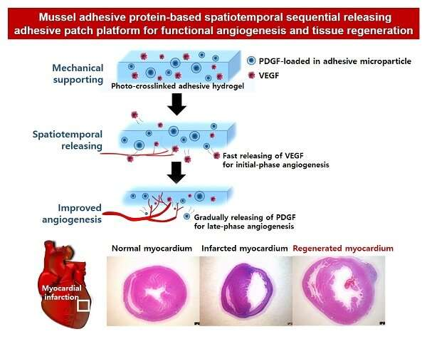 Blood vessel formation in damaged tissues with mussel adhesive protein