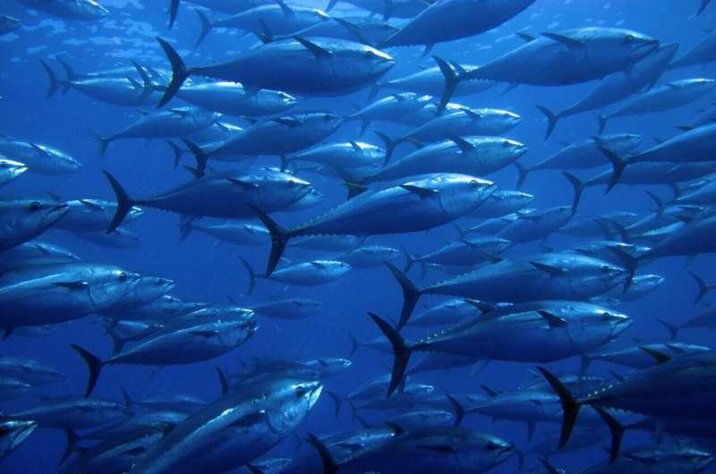 Bluefin tuna reveal global ocean patterns of mercury pollution