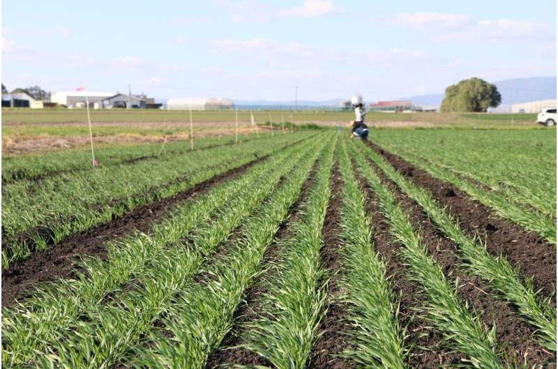 Impulsar la producción de cebada desde cero