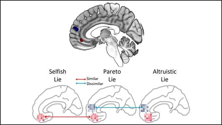 Brain activity reveals when white lies are selfish