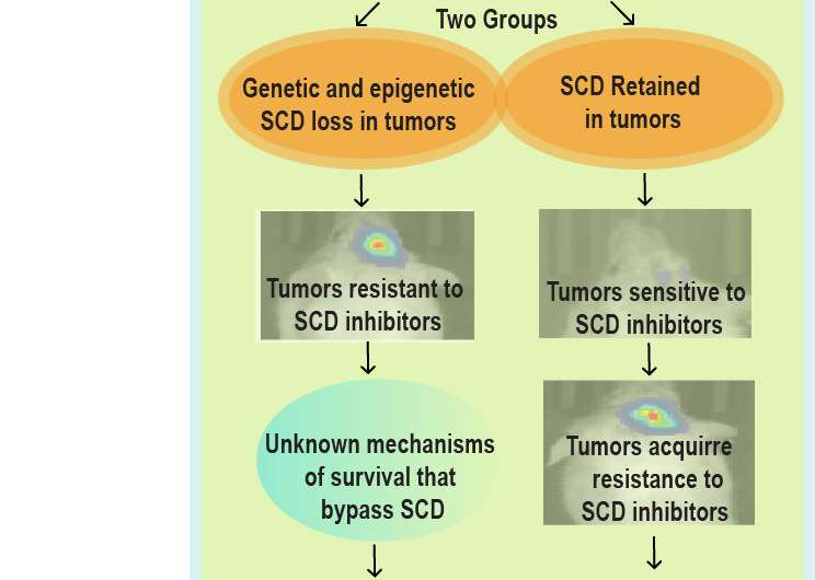 Brain tumor study reveals surprising gene deletion and method to overcome drug resistance