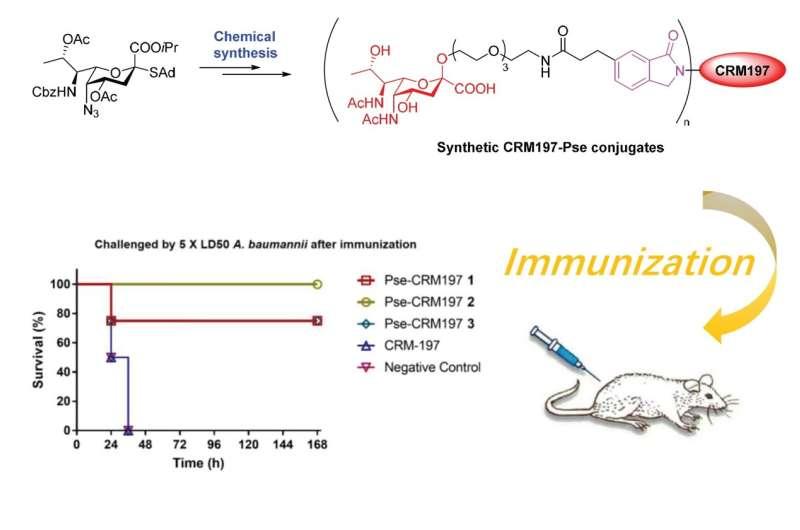 Breakthrough in vaccination development against resistant A. baumannii infection