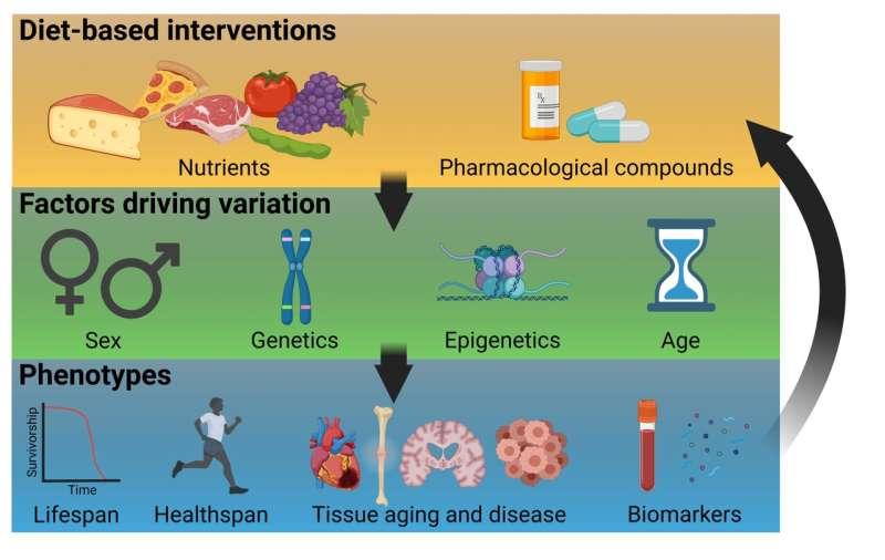 Buck researchers provide a framework to study precision nutrigeroscience