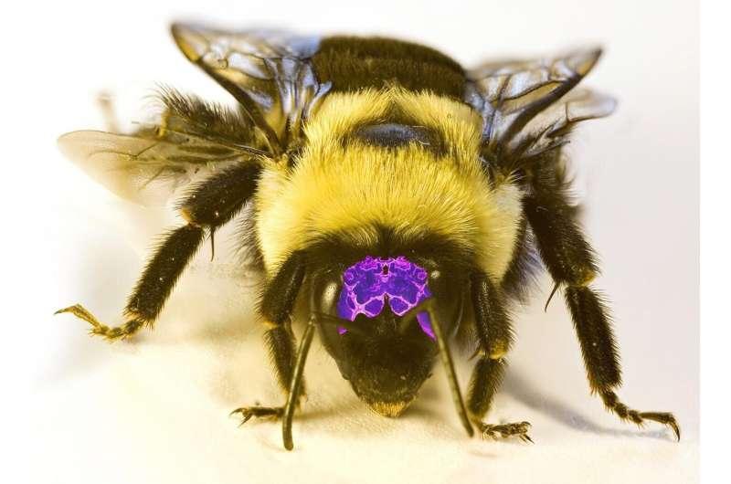 'Sopa de cerebro de insectos' amplía el menú para los científicos que estudian el cerebro de los animales