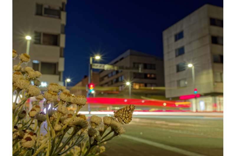 Butterflies and moths found to evolve as a means of adapting to warmer urban areas