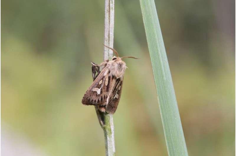 Las mariposas y las polillas tienen dificultades para adaptarse a un clima que cambia rápidamente