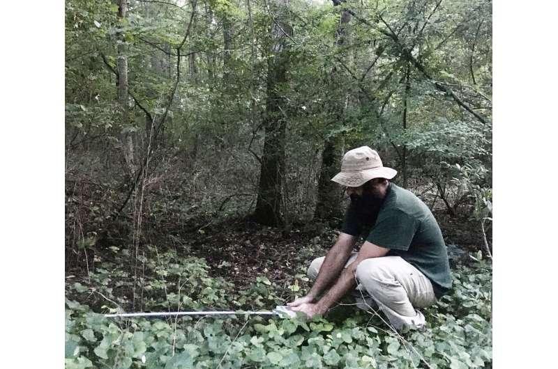 By reducing forest floor temperature, invasive shrubs stifle native species