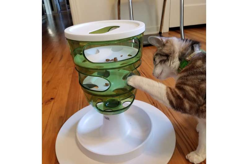 Cats prefer to get free meals rather than work for them
