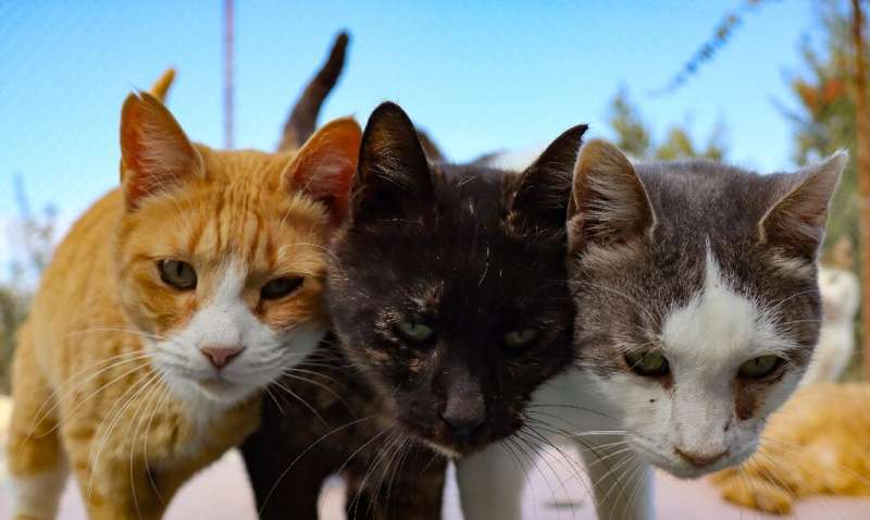 Cats and dogs provide other benefits to their owners, scientists are keen to point out
