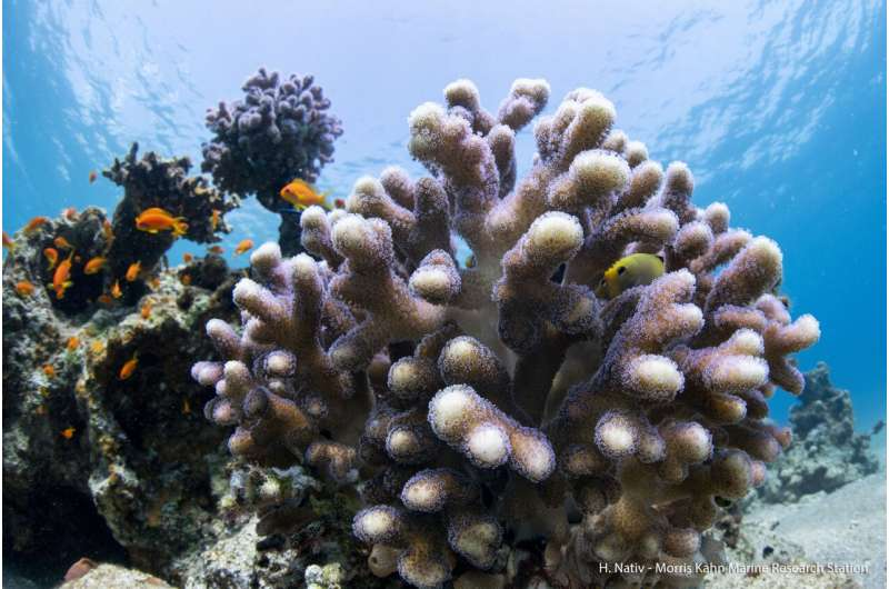 Cell atlas of stony corals is boost for coral reef conservation efforts