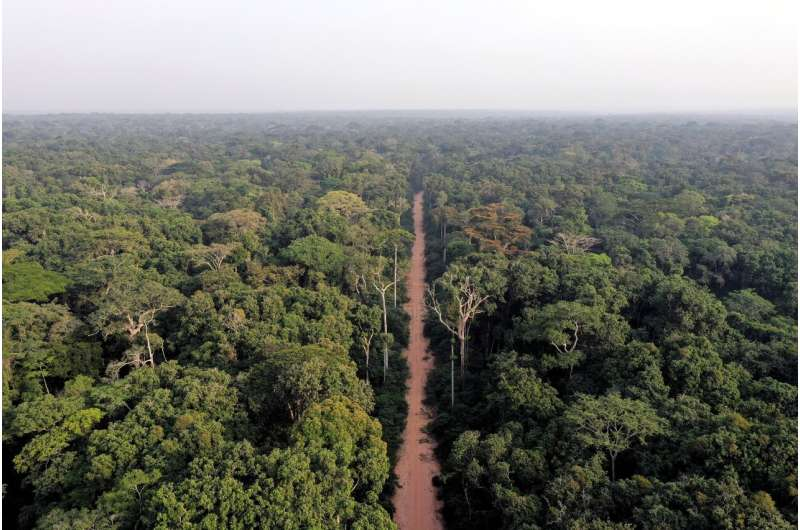 Central African forests are unequally vulnerable to global change
