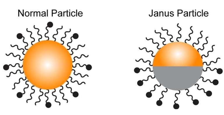 Chemists create chemical probe to better understand immune response