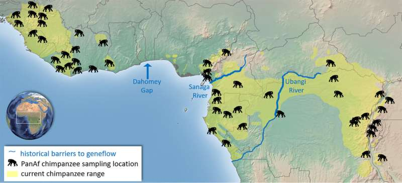 Chimpanzees without borders
