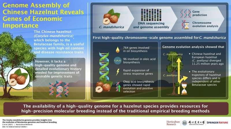 Chinese hazelnut: The newest piece in the hazelnut genome puzzle