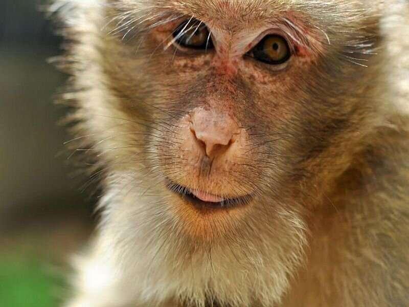 Chinese man dies of rare virus from monkeys