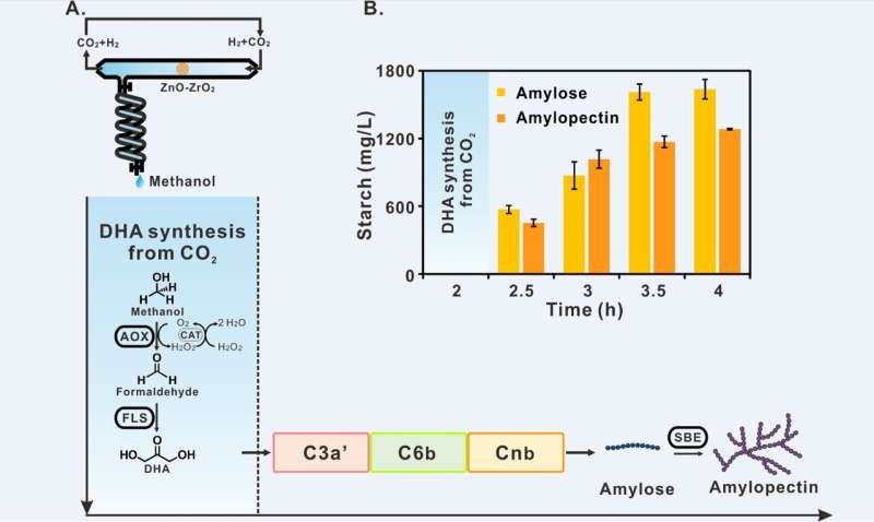 Chinese scientists report starch synthesis from CO2