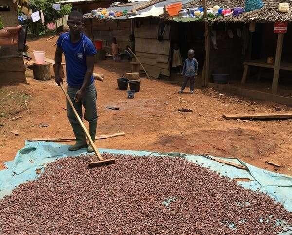 Solución de chocolate: cómo la industria del cacao podría acabar con la deforestación en África occidental