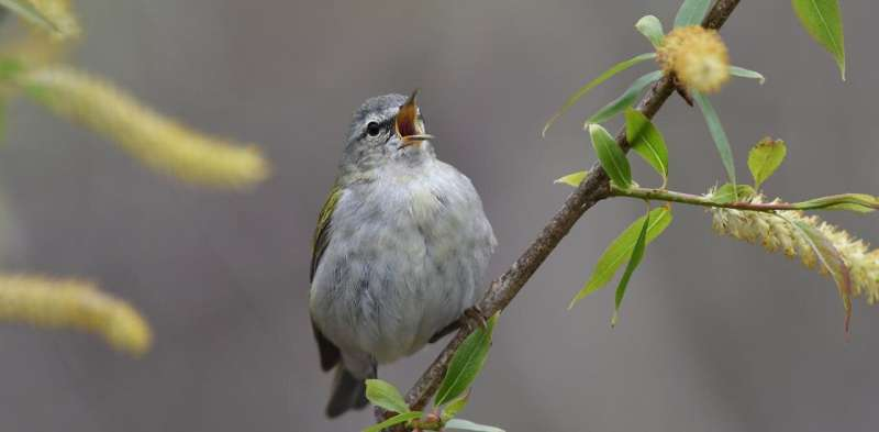 Cities can help migrating birds on their way by planting more trees and turning lights off at night