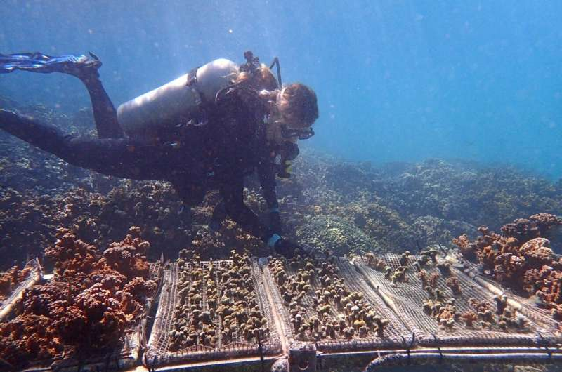 Climate change-resistant corals could provide lifeline to battered reefs