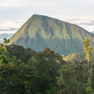 Climate change sends tropical species racing to higher elevations while temperate counterparts lag behind