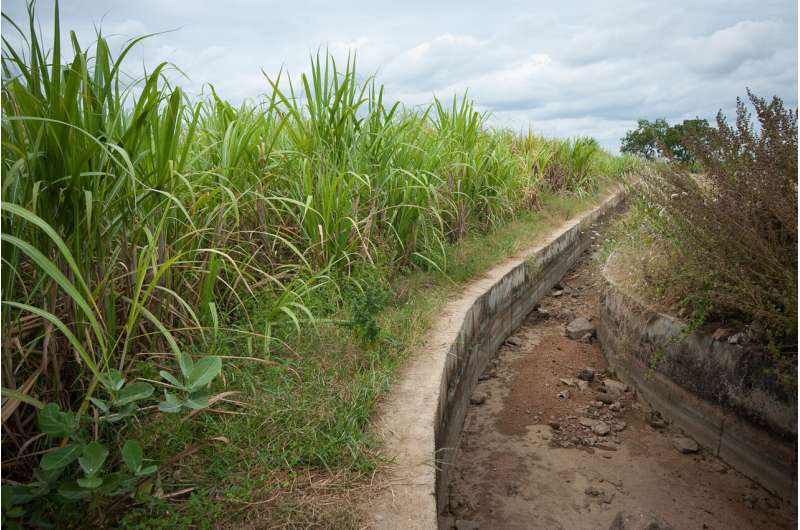 Climate-smart rice cultivation system shows promising results