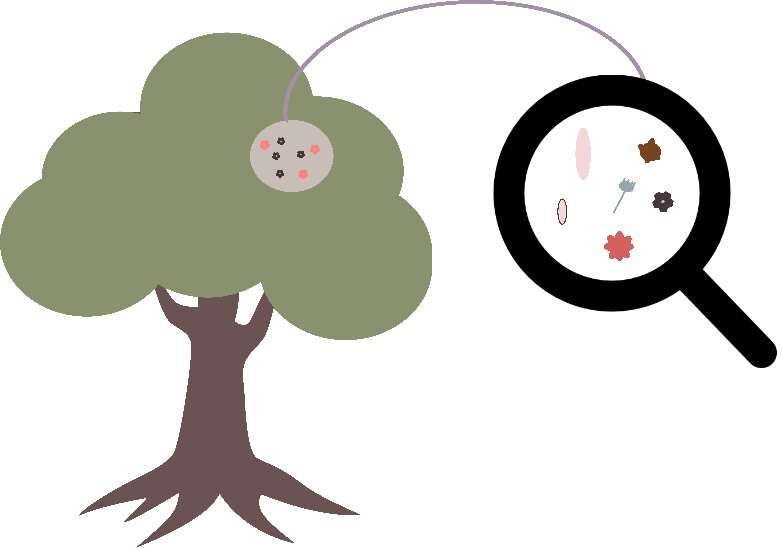 Climate warming can influence fungal communities on oak leaves across the growing season