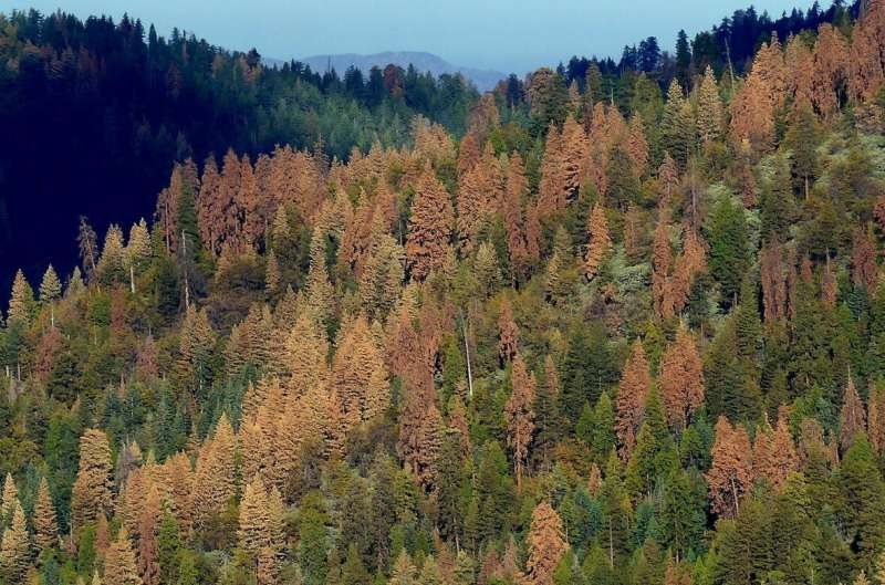 Climate impacts drive east-west divide in forest seed production