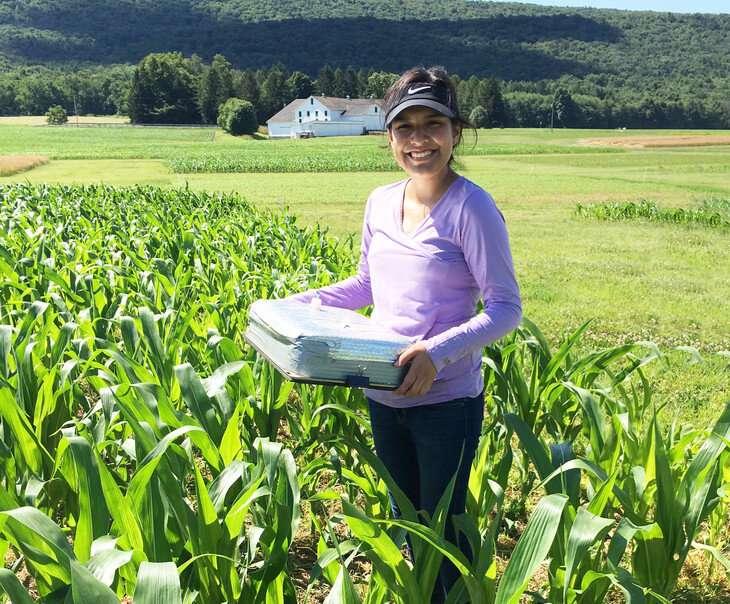 Las estrategias agrícolas climáticamente inteligentes pueden reducir las emisiones de óxido nitroso de la producción de maíz