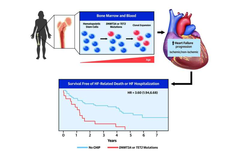 CNIC scientists identify mutations acquired by blood cells that accelerate heart failure progression