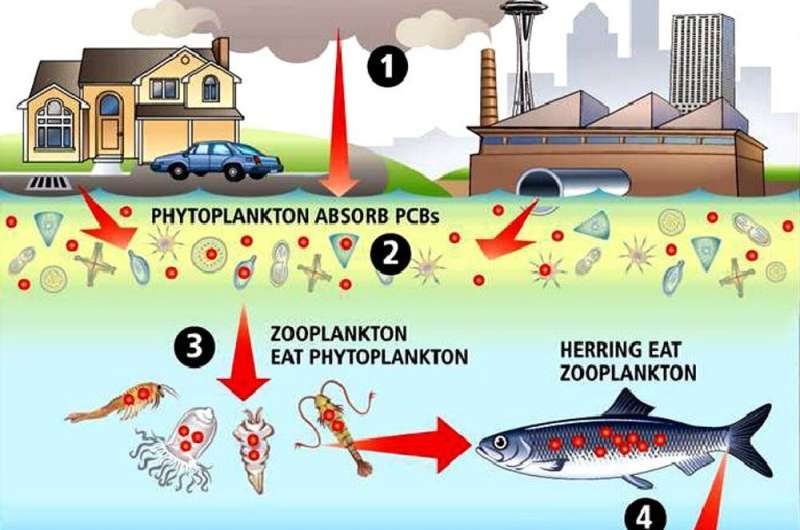 Coastal landfills risk leaking long-banned toxic chemicals into the ocean