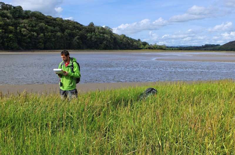 Coastal wetlands are nature's flood defences