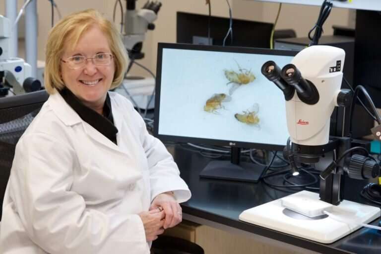 Cocaine's effect on the brain: Fruit fly research shows impact at the cellular level