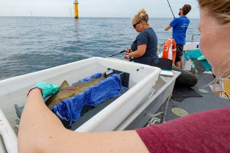 Cod behave differently in noisy environments