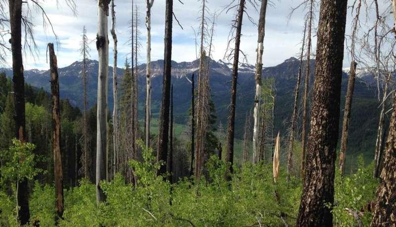 Los brotes combinados de escarabajos de la corteza y los incendios forestales auguran un futuro incierto para los bosques