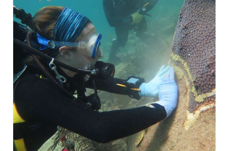 Common antibiotic effective in healing coral disease lesions