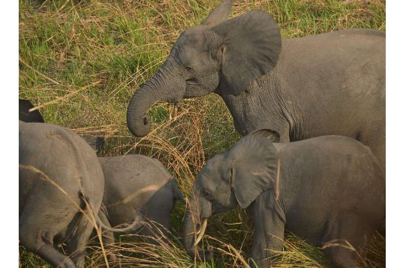 Congo had only recently been praised by UNESCO for elephant conservation efforts