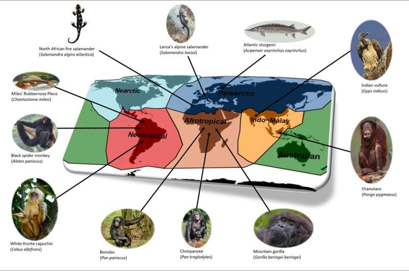 Consequences of the loss of threatened vertebrates